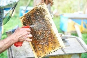 Обработка от варроатоза пчел