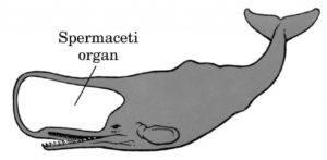 Спермацет