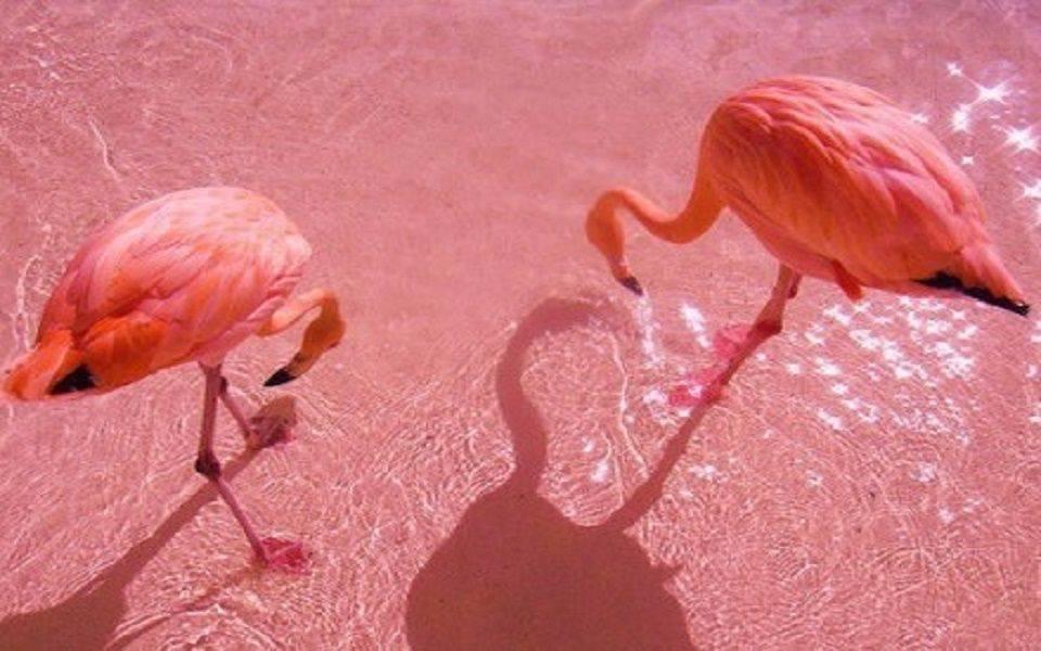 Фламинго на воске