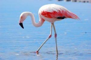фламинго из воска