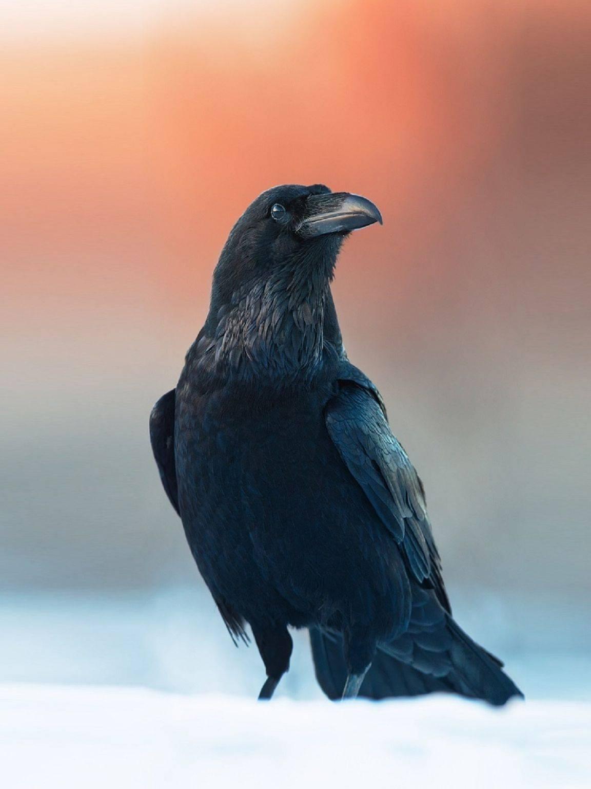 Гадание на воске ворона