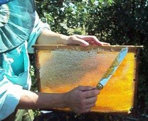 забрус пчелиный применение