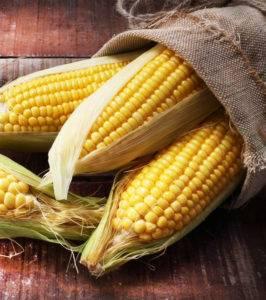 Молочно восковая спелость кукурузы